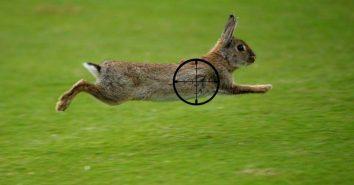 Rabbit-Hunting-with-Pellet-Gun-1024x537-1024x537