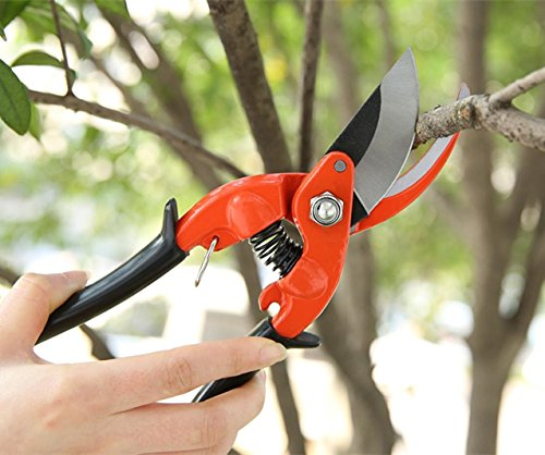 pruning sccissors.jpg