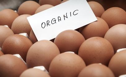 Organiceggs_406x250-1.jpg