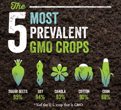 5-common-gmo-crops.png