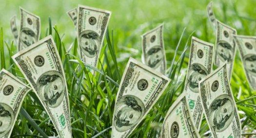 money grass2 (1)