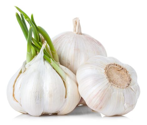 photodune-7269783-garlic-l